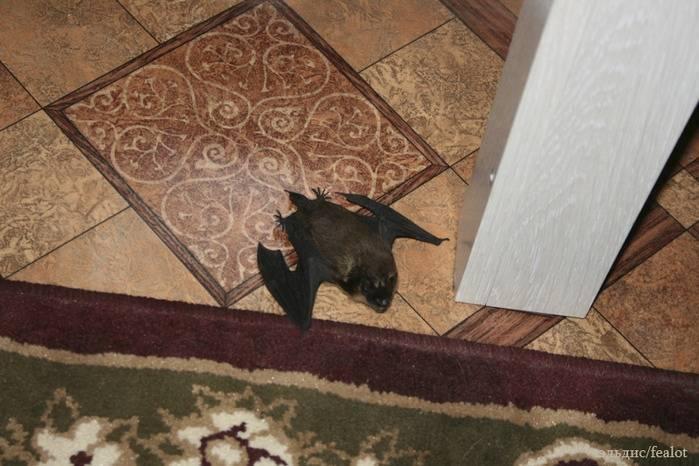 Как избавиться от летучих мышей в доме или на чердаке?