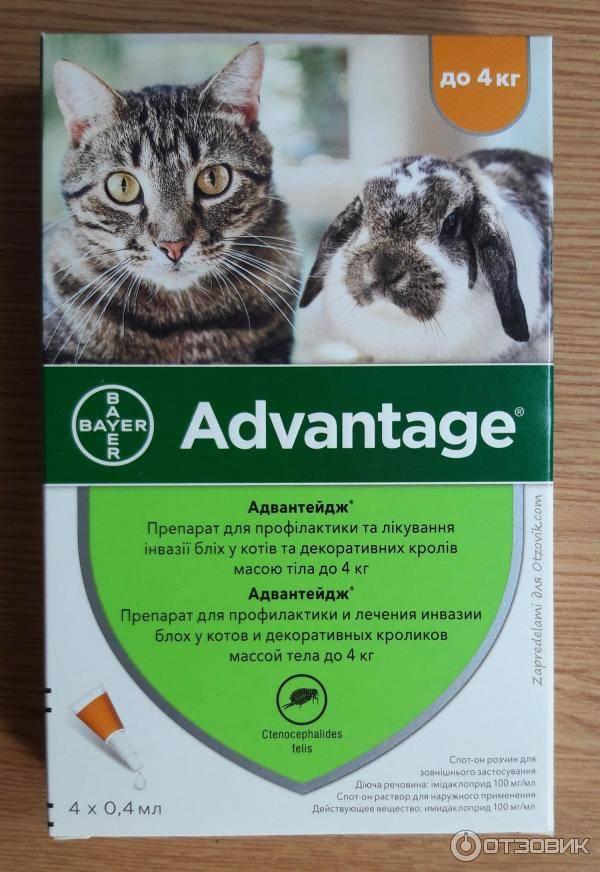 Капли адвантейдж для кошек и котят на холку: инструкция по применению от блох, правила использования, преимущества