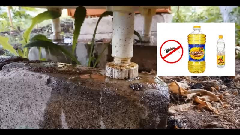 Избавиться от муравьев: что полезного можно сделать в саду с уксусом