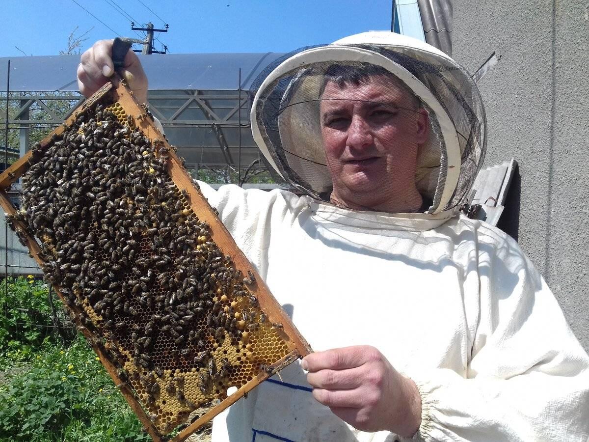 Враги и вредители пчелы: как бороться, большая и малая восковая моль, признаки болезни, меры борьбы, профилактика