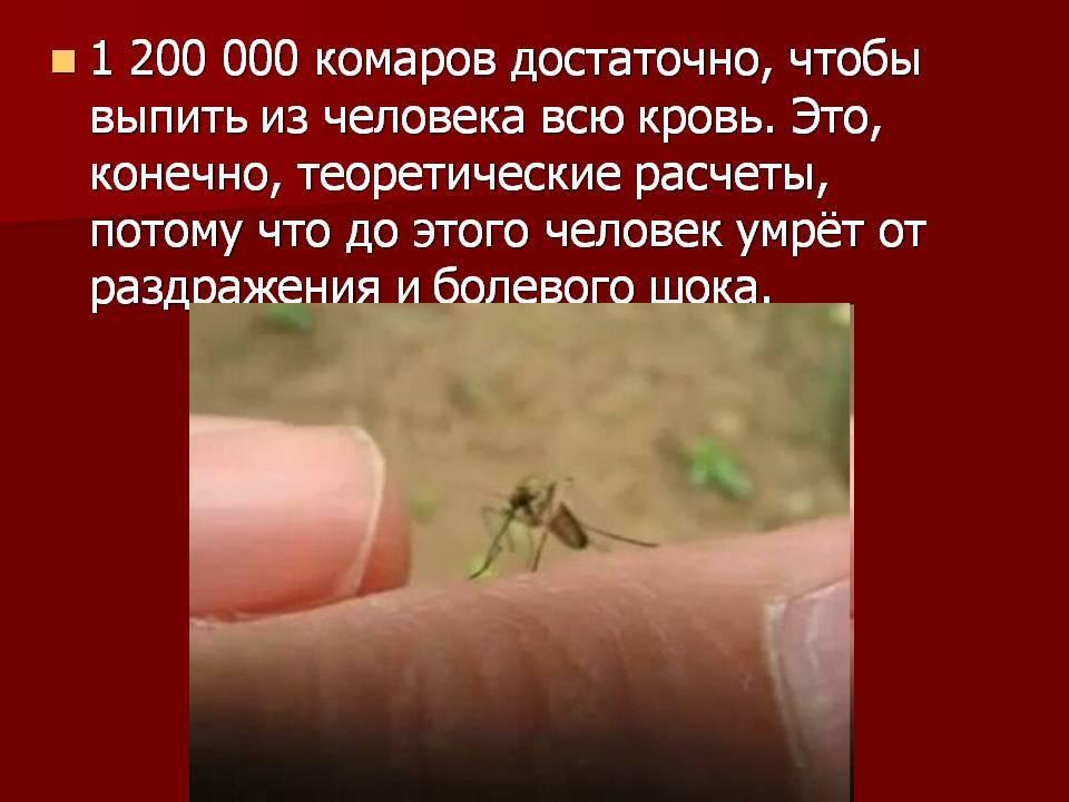"""Вот какая группа крови самая """"вкусная"""" для комаров"""