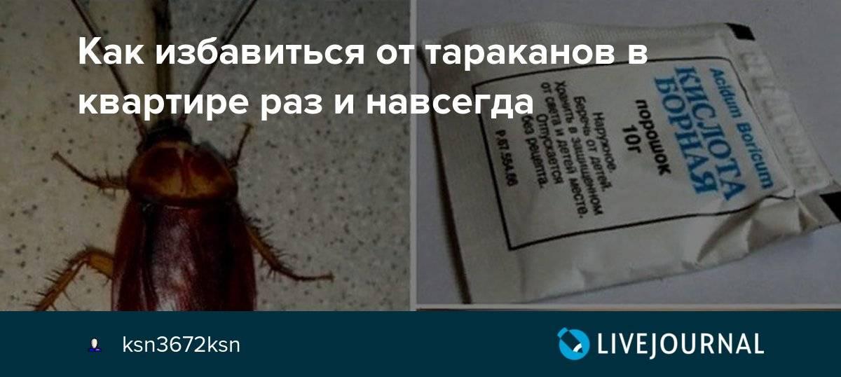 Кто в доме хозяин, или как избавиться от тараканов в квартире навсегда